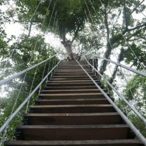 Casa Oro Group Casa-Oro-Group-Experiences-Activities-Eco-Tour-Adventure-Travel-Responsible-Travel-San-Juan-del-Sur-Nicaragua-Parque-Aventuras-Stairway-Zip-Line-Expedition-Trees-Canopy-Nature-Thrill-300x300 Casa Oro Group