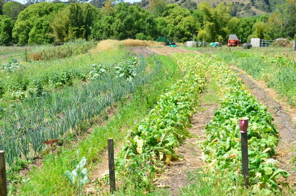 Healthy Food Permaculture
